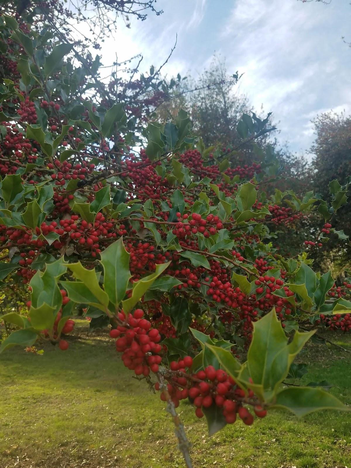 berrytree01