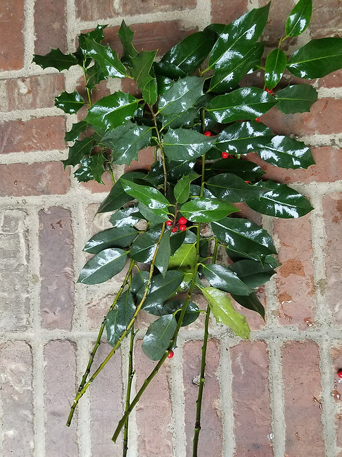 Bulk Green Holly (sold by the pound)