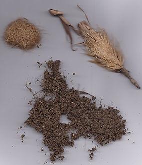Posidonia compost & ριζικό σύστημα του θ