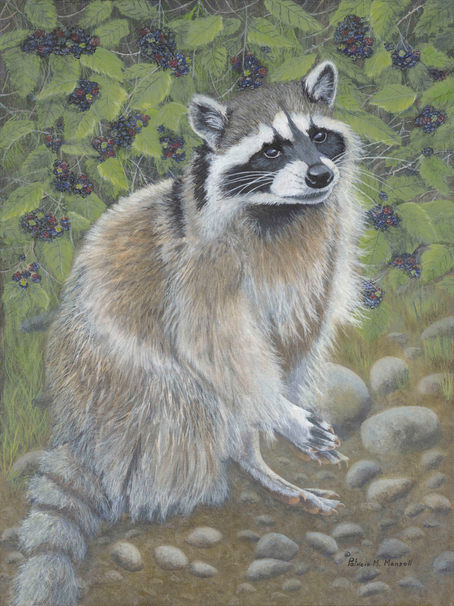 The Blackberry Patch  (Raccoon)