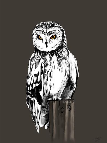 White owl ekatsart.png