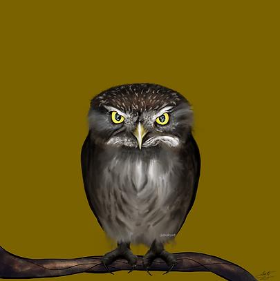 Owl ekatsart.png
