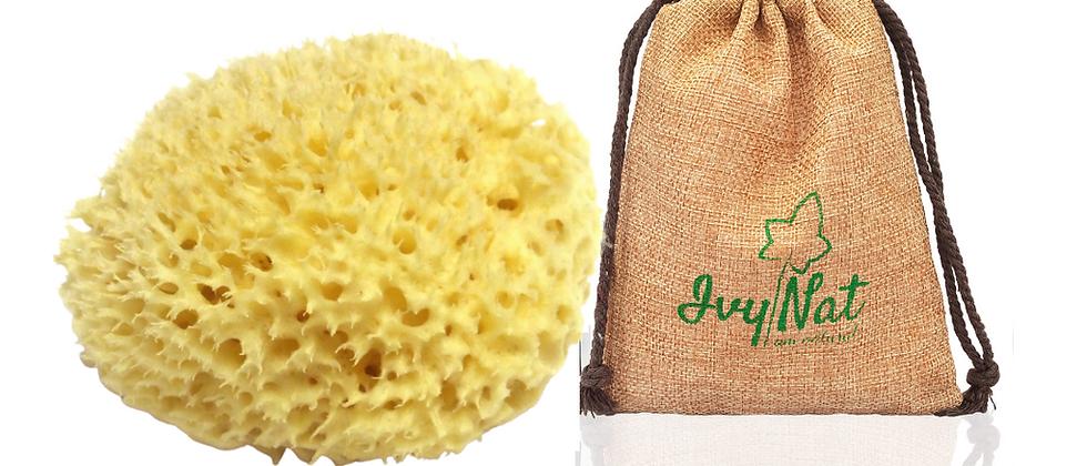 Natural Honeycomb Sea Sponge