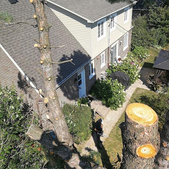 abattage d'arbre rivière-du-loup, abattage d'arbre la pocatière, abattage d'arbre Kamouraska, abattage d'arbre montmagny, abattage d'arbre l'islet