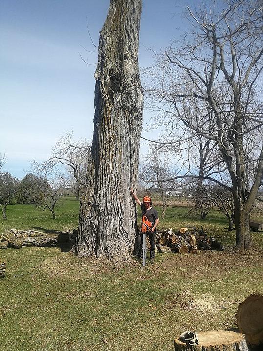 Abattage d'arbres Rivière-du-Loup, Abattage d'arbres La Pocatière, Abattage d'arbres Kamouraska, abattage d'arbres l'Islet, abattage d'arbre Montmagny