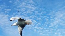 Ella y el vuelo de una gaviota.