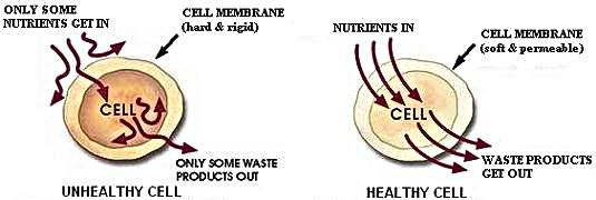 Healthy, unhealthy cells
