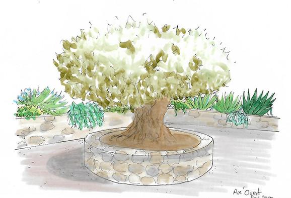 Croquis de l'olivier - Montalivet