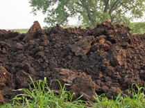 Coarse Dirt