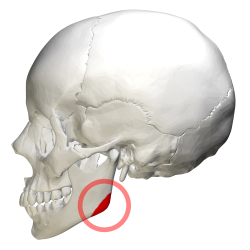 Image result for mandible angle