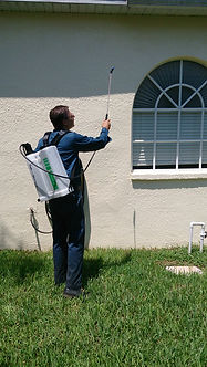 Pest control in Palm Harbor