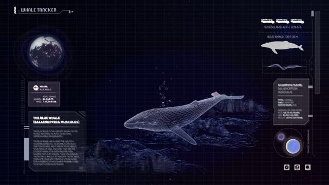 Whale Tracker