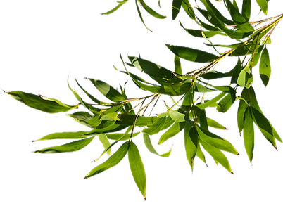 Leaves-PNG-ban2.png