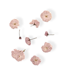 small flower-07.png