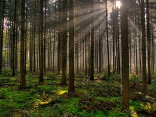 Construcción sostenible en madera