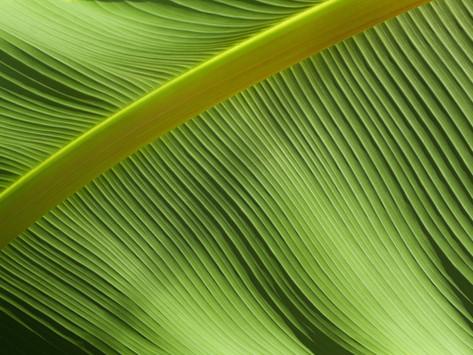 4 proven benefits of liquid chlorophyll