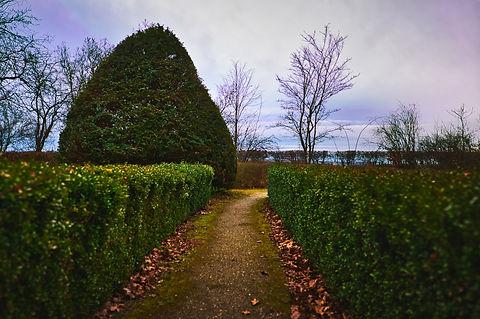 hedges-4775980_1920.jpg