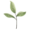 leaves-5677717_1920.png