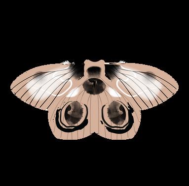 pinkspot-pink-moth-contact.png