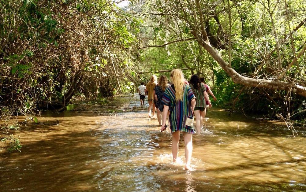 Ethical Elephant Tourism Thailand Chiang Mai