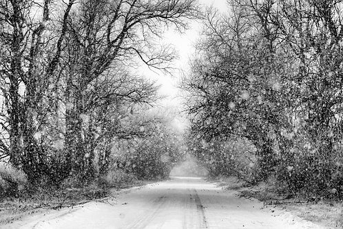 snowfall serenity
