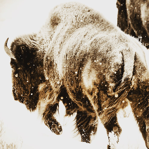 Wyoming, Yellowstone, wildlife, bison, landscape, sepia, limited edition, fine art, photography