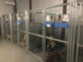 Dogs in kennel.JPG
