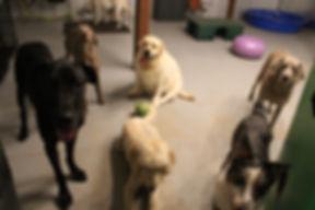 Dogs Inside.JPG