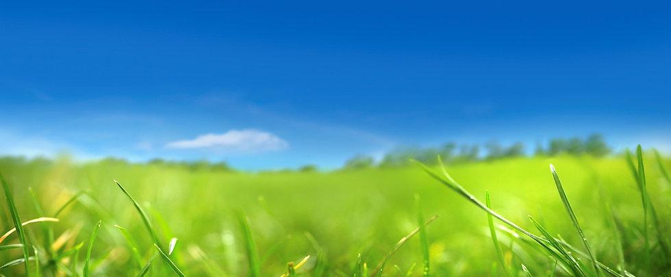Arrière plan Ciel et herbe.jpg