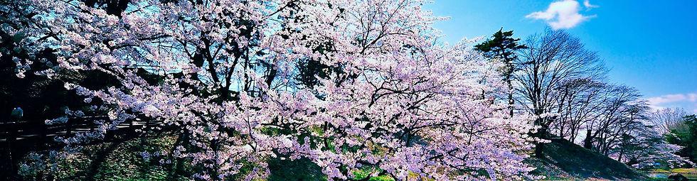 fruittrees.jpg