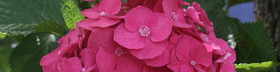 floweringshrubs.jpg