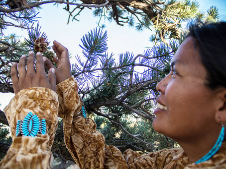 Immersion dans un ranch Navajo...