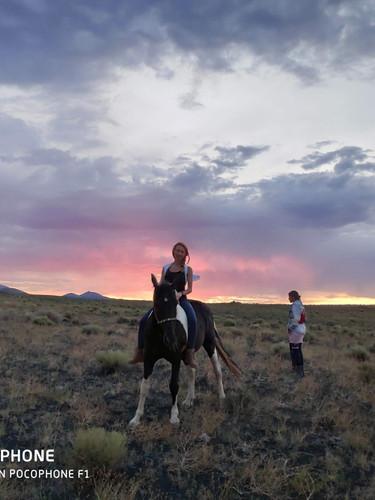 Around Horses