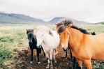 11 au 13 Juin 2021 : Danses, Rythmes et chevaux : un stage cheval-musique