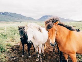 11 au 13 Juin 2021 : Rythmes, expression corporelle et chevaux : un stage cheval-musique