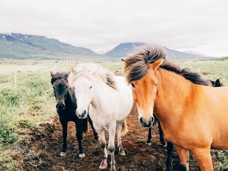Samedi 12 au Lundi 14 Juin 2021 : Danses, Rythmes et chevaux en liberté