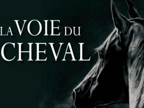 Vendredi 12 au Dimanche 14 Novembre 2021  -  La Sagesse des Chevaux.