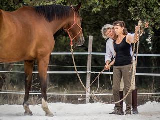 15 - 17 OCTOBRE 2021 : développez votre expertise équine!