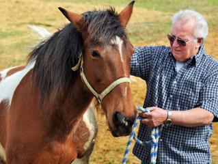Equithérapie: les chevaux aident à soigner les anciens combattants américains