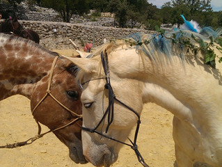 La lettre de Sylvain : cheval blanc, cheval noir.