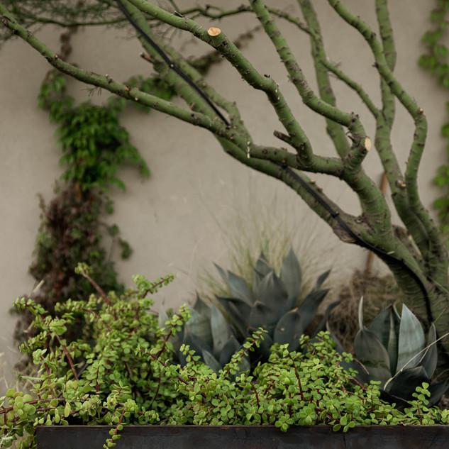 The Green Room Collaborative Landscape A