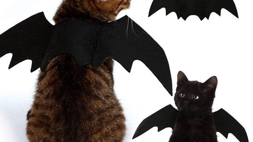 Cute Halloween Cat Costume