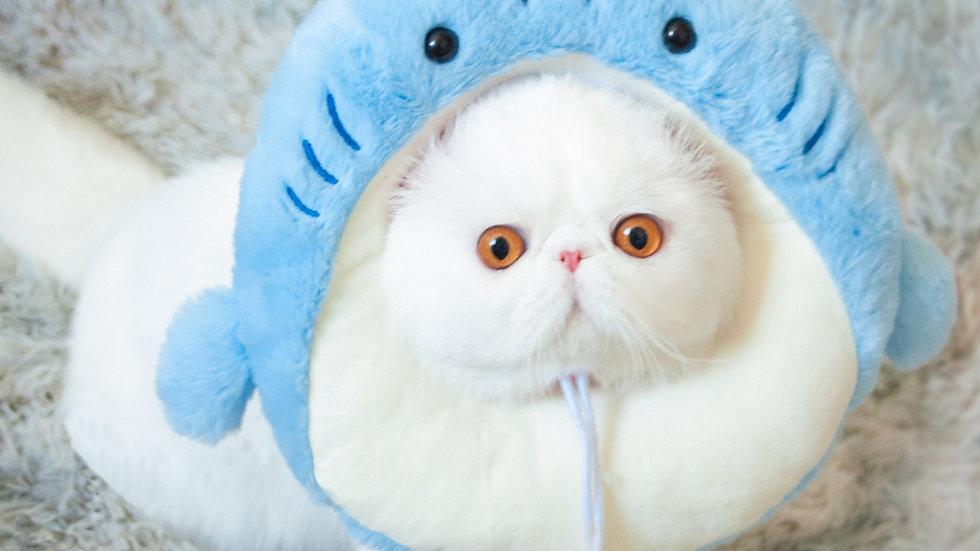 Shark Cat Collar