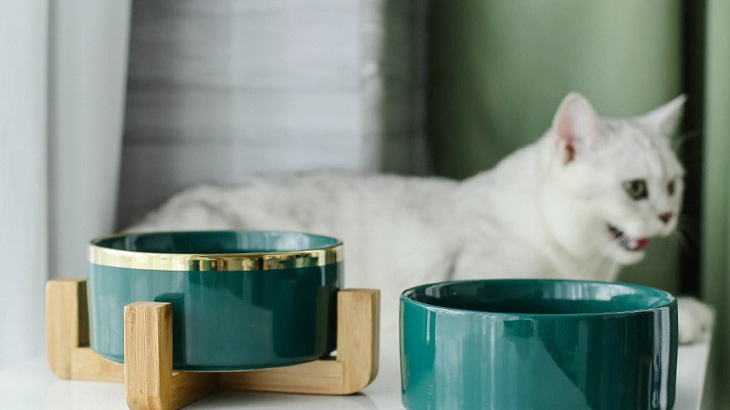 Stylish Kitty Bowls