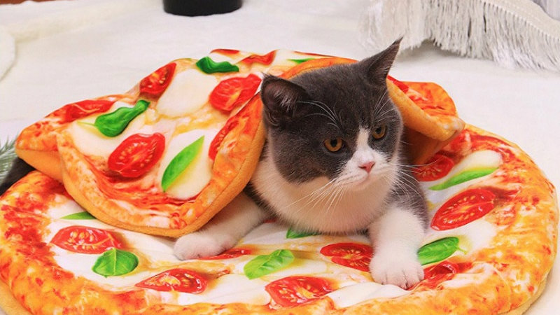 Funny Food Cat Cushion