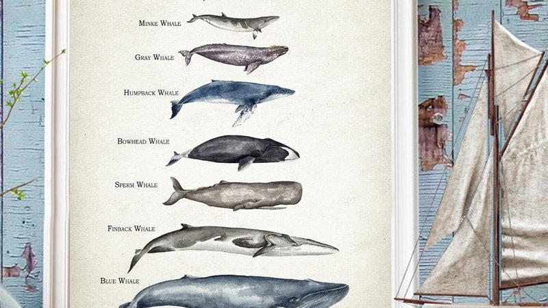 Whales Size Comparison Chart Print