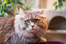 Kitty-Cafe-Cats-14.jpg