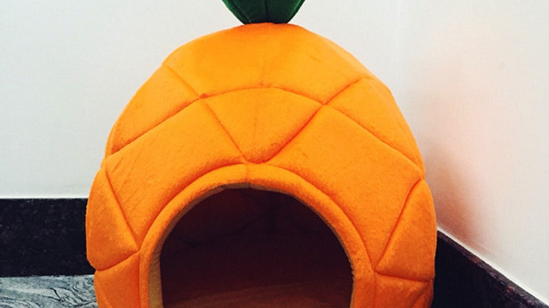 Fruity Cotton Pet Beds