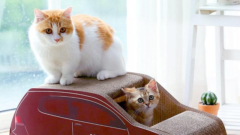 Cool Design Cat Scratcher