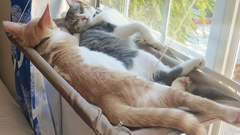 Cute Cat Hanging Beds